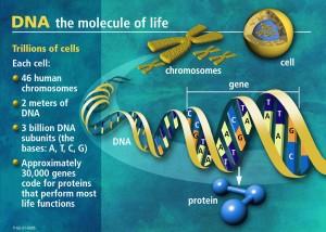 DNA[1]