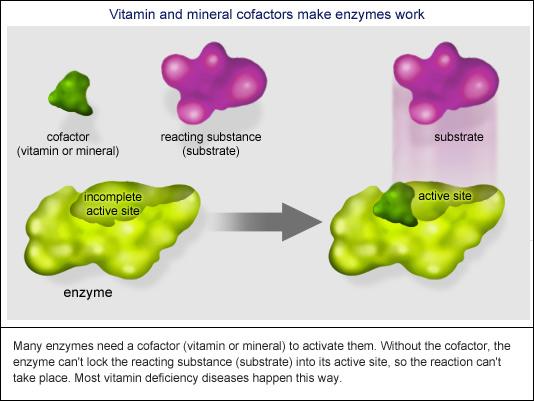 vitamins[1]