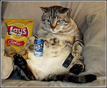 Kids-Cats-Grown-Ups-How-to-Get-those-Couch-Potatoes-OFF-the-Couch[1]