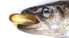fishoil[1]